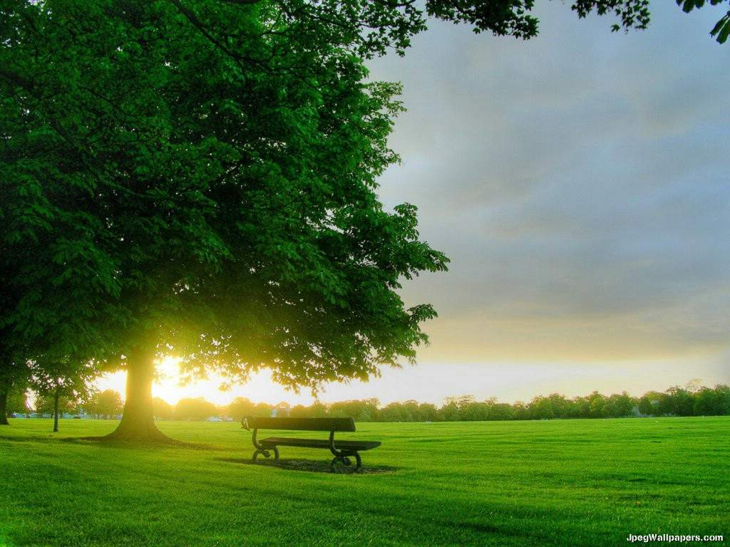 Green-Grass-And-Big-Tree-92456.jpeg