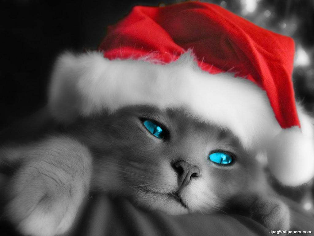le fantasie chat grattis
