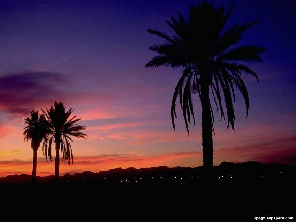 Tropical sunset Arizona