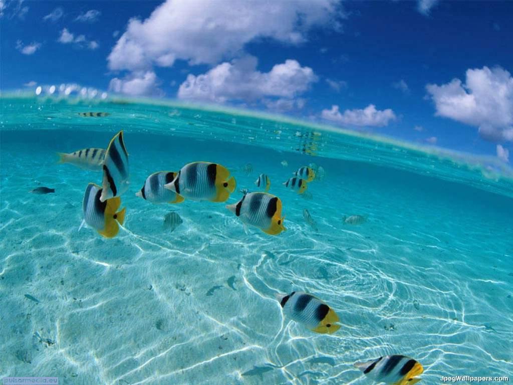 Underwater 10 wallpaper