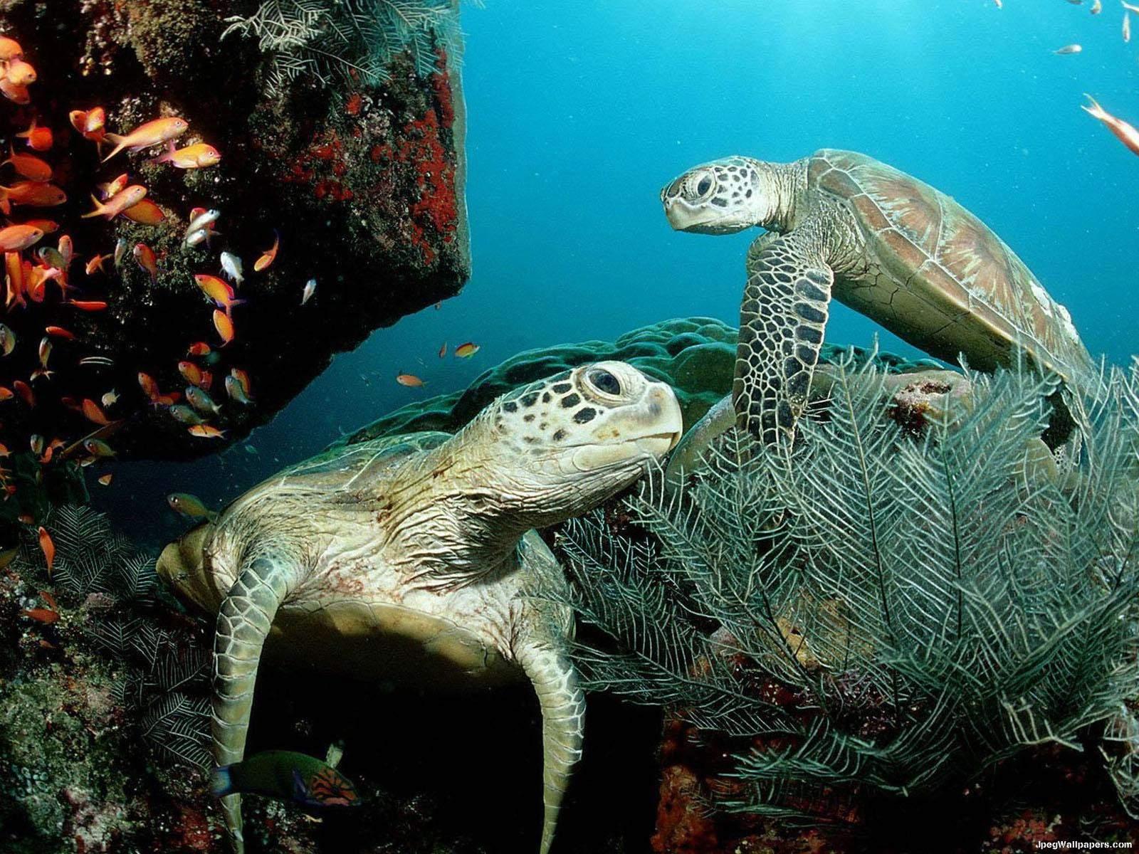 Download underwater wallpaper underwater 12