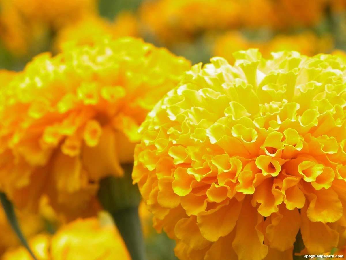 yellow - Beauty